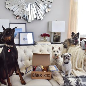 Ashley Nicole Interiors Dogs and Design