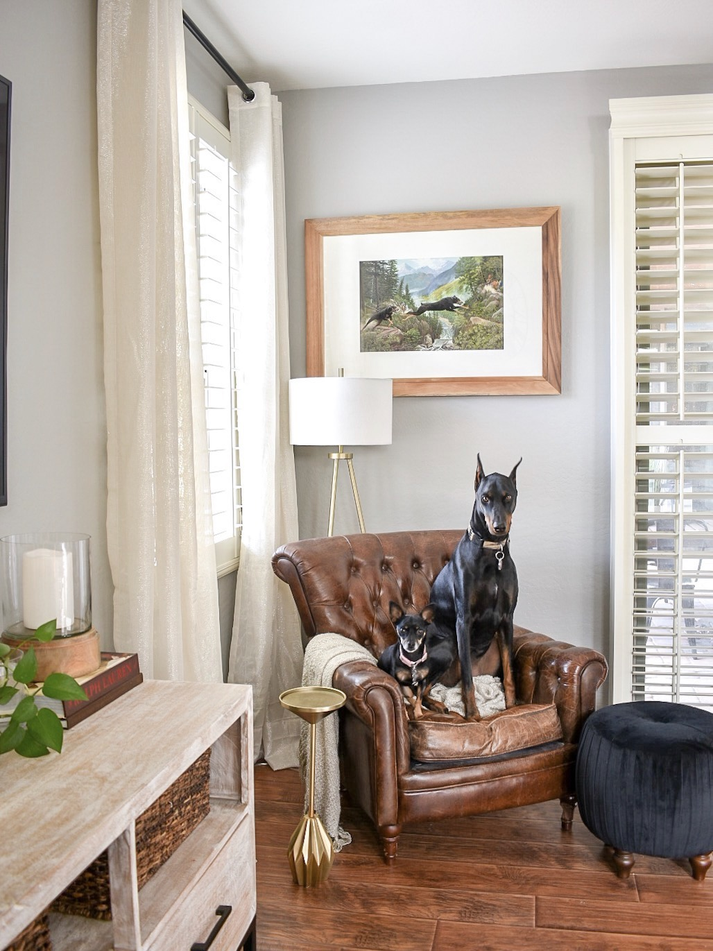 Rooms Designed For Dogs: Dogs & Design
