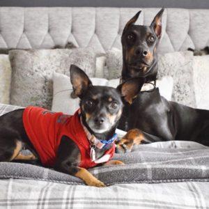 Ashley Nicole Interiors Dogs and Design