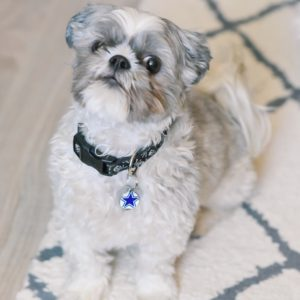 Ashley Nicole Interiors Dogs & Design